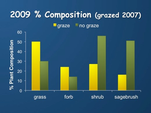 In this graph you can see how the composition of the pastures changed when they were grazed by sagebrush eating cows. Ungrazed areas continued to increase in sagebrush, while sagebrush decreased in grazed areas.  Way to go cows!