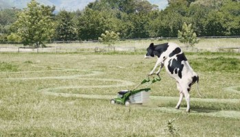 The Easiest Way To Treat Pink Eye On Pasture