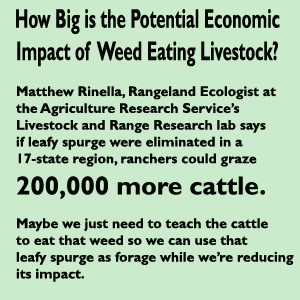 Eliminate Weeds for 200,000 more cattle