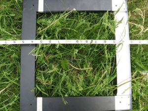 I really admire researchers who do the tedious work of gathering the information we need to make good decisions. For the plant surveys, Cindy stretched a tape measure across the paddock. Every 30 feet she identified the plants inside a 14 inch square, and figured out the percentage of space those plants occupied in the square. There were 4 to 5 sample squares in each of 12 paddocks. That means she did this for 48 to 60 squares!