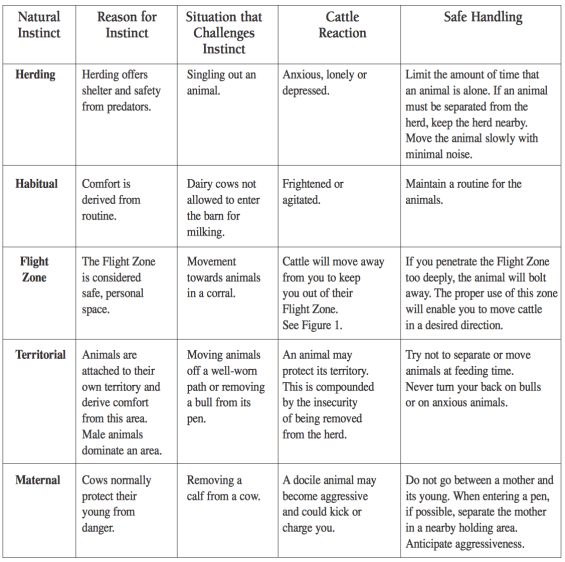 Cattle Behavior and Responses. Click for full size.