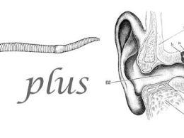 Worm plus ear (public domain, via wikimedia commons)