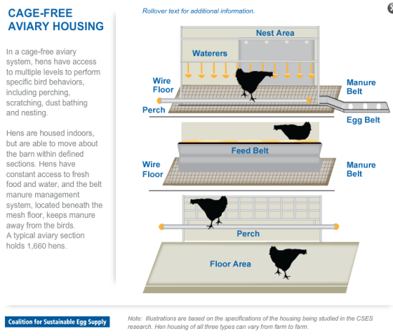 Cage-Free Illustration