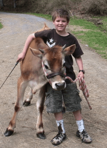 Lisa's son spending some time with one of their cows.