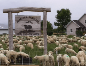 Dave Scott's Sheep Ranch
