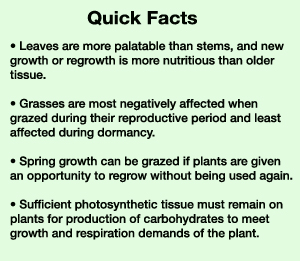 Quick Grass Facts