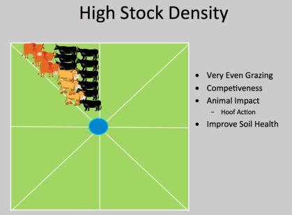 High Stock Density