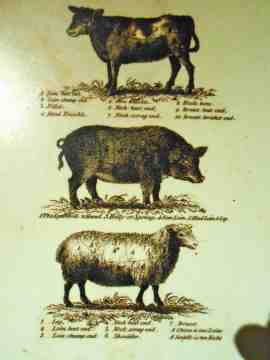 "As an organic livestock farmer, I wanted to know all about the animals Jefferson raised at Monticello. In addition to the three species pictured above, chickens were raised for meat and eggs, milk cows for dairy, and fish were kept on the mountaintop through use of ""live wells."""