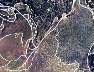Ecological-state map units delineated on the soil survey base map.