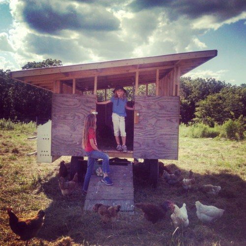 chicken house chism heritage farm