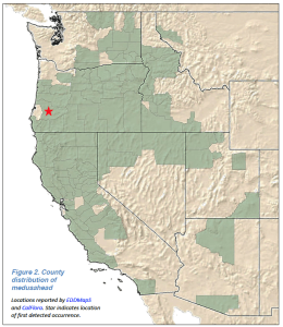 Medusahead Distribution