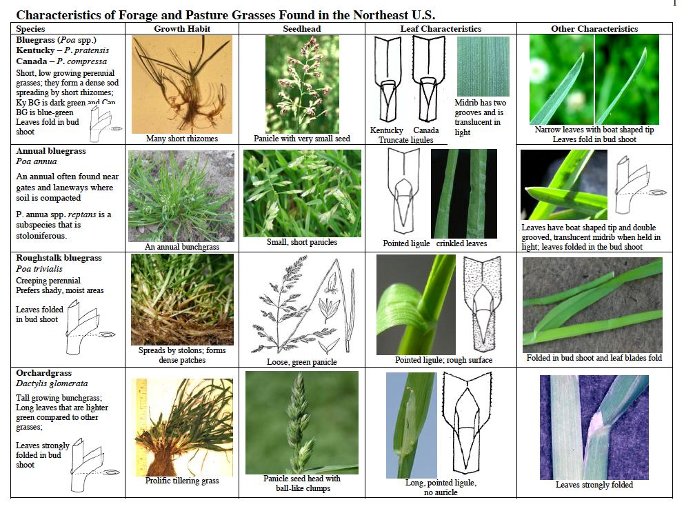 Identify Your Pasture Grasses On Pasture