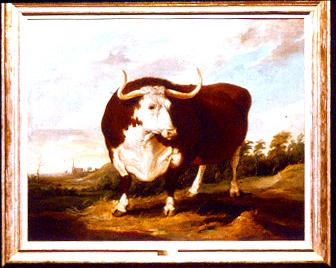 herefordshire_bull