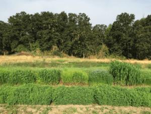 Jonathan Rupert Farm Trials