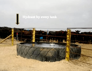 Tire Tank for Cattle