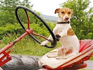 farmer+Dog+7