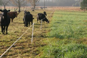 Photo courtesy of Georgia Grazing Lands Coalition
