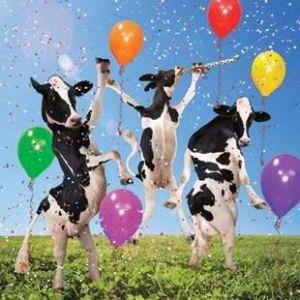 cows-celebrate