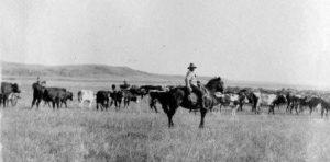 cowboy_cattle