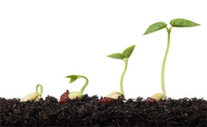 seed_growing_plant