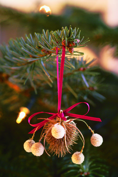 teasel-ornament