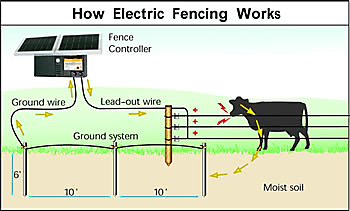 [SCHEMATICS_48ZD]  Winter Electric Fence Solutions – On Pasture | Wiring Diagram Hot Wire Fence |  | On Pasture