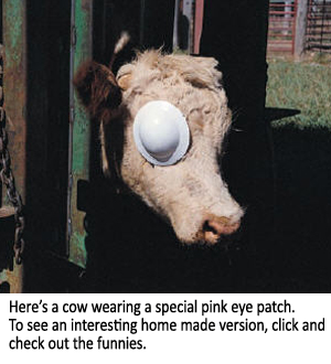 The Easiest Way to Treat Pink Eye – On Pasture