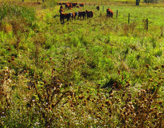 Grazing Around Streams – More Ways To Do The Right Thing