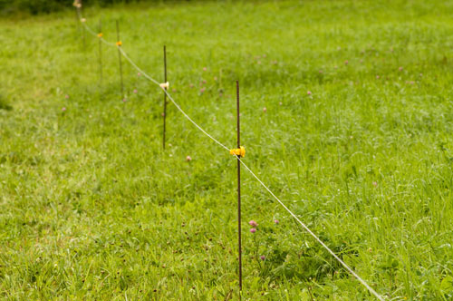 The Power Of One Wire On Pasture