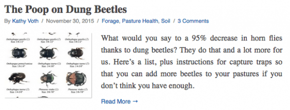 What would you say to a 95% decrease in horn flies thanks to dung beetles? They do that and a lot more for us. Here's a list, plus instructions for capture traps so that you can add more beetles to your pastures if you don't think you have enough.