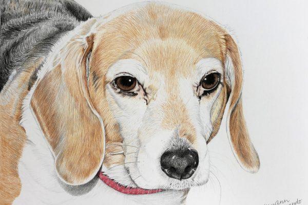 Dixie the beagle
