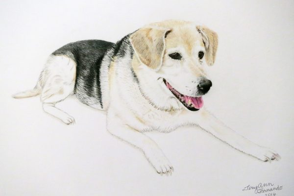 Sasha the German shepherd/beagle mix