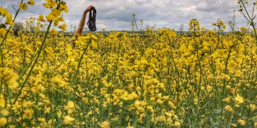 A field of yellow flowers, with a hand emerging from it holding a pair of knickers. Photo.