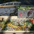 多肉納め'にて二和園〜松風園へ 2012・12・28