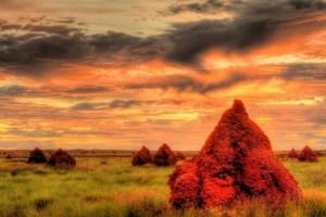 Termite Mounds, Onslow, Western Australia
