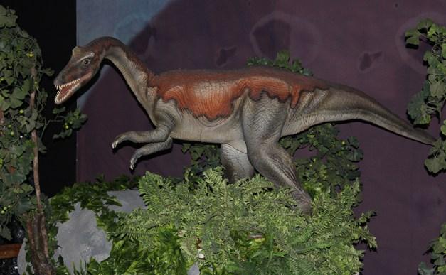 Ornithominus