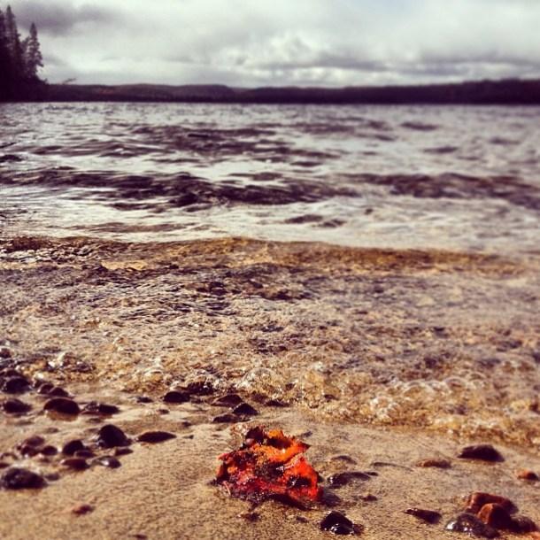 jana_b_ananas Fall is rolling in
