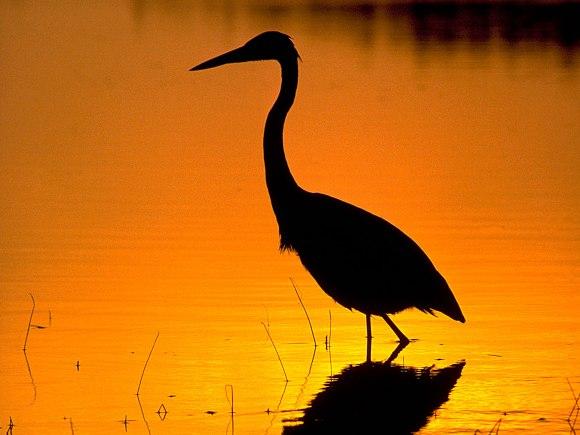 Birding4_Huron