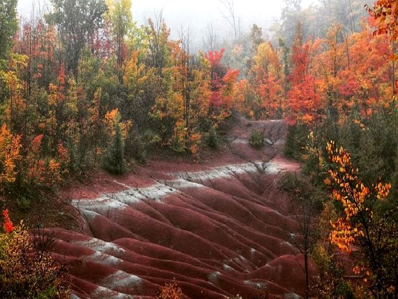 Fall Colours at the Cheltenham Badlands