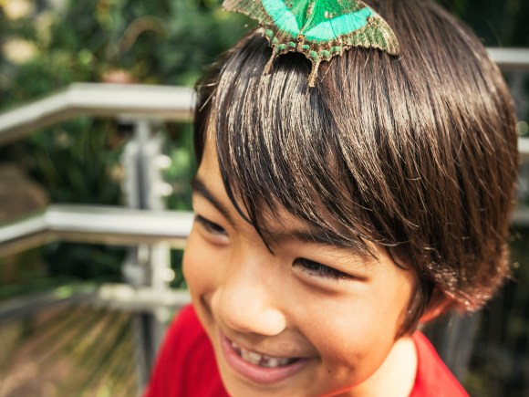 Little boy enjoying the butterfly conservatory