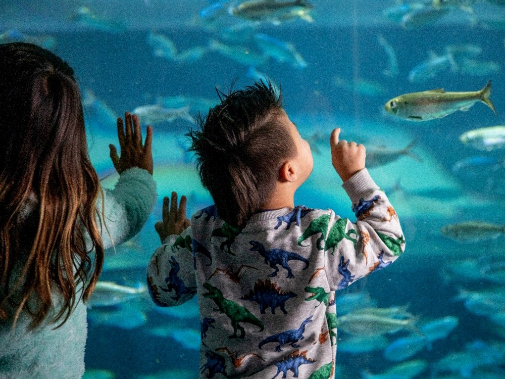 Two children spellbound by a Ripley's exhibit