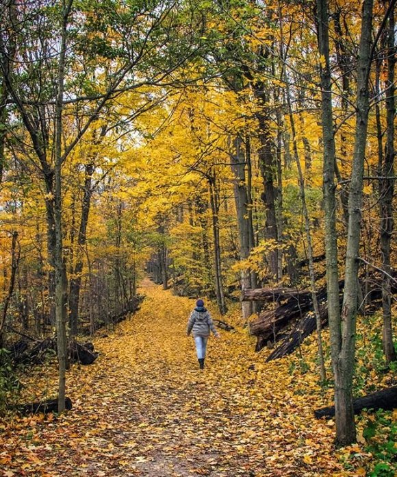 a woman hikes down a forest path lit up with the colourful falling leaves