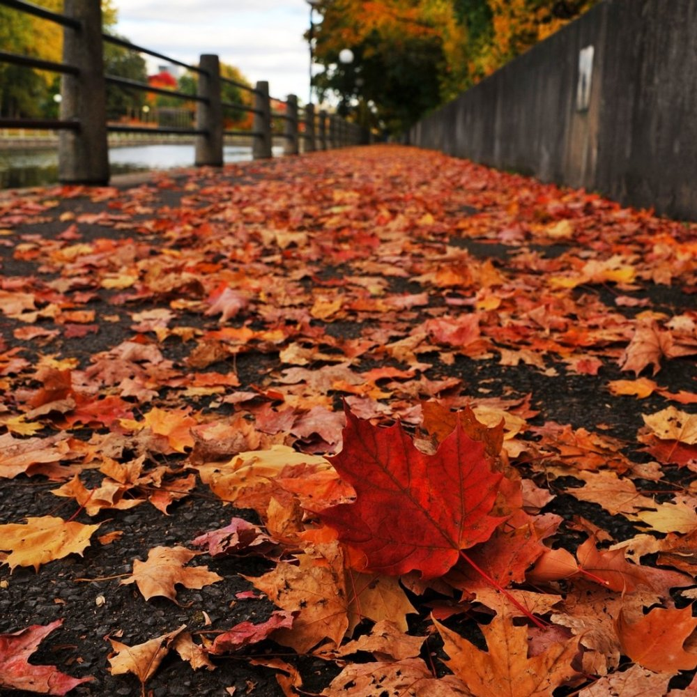 colourful red and orange leaves scattered on the sidewalk along the Rideau Canal