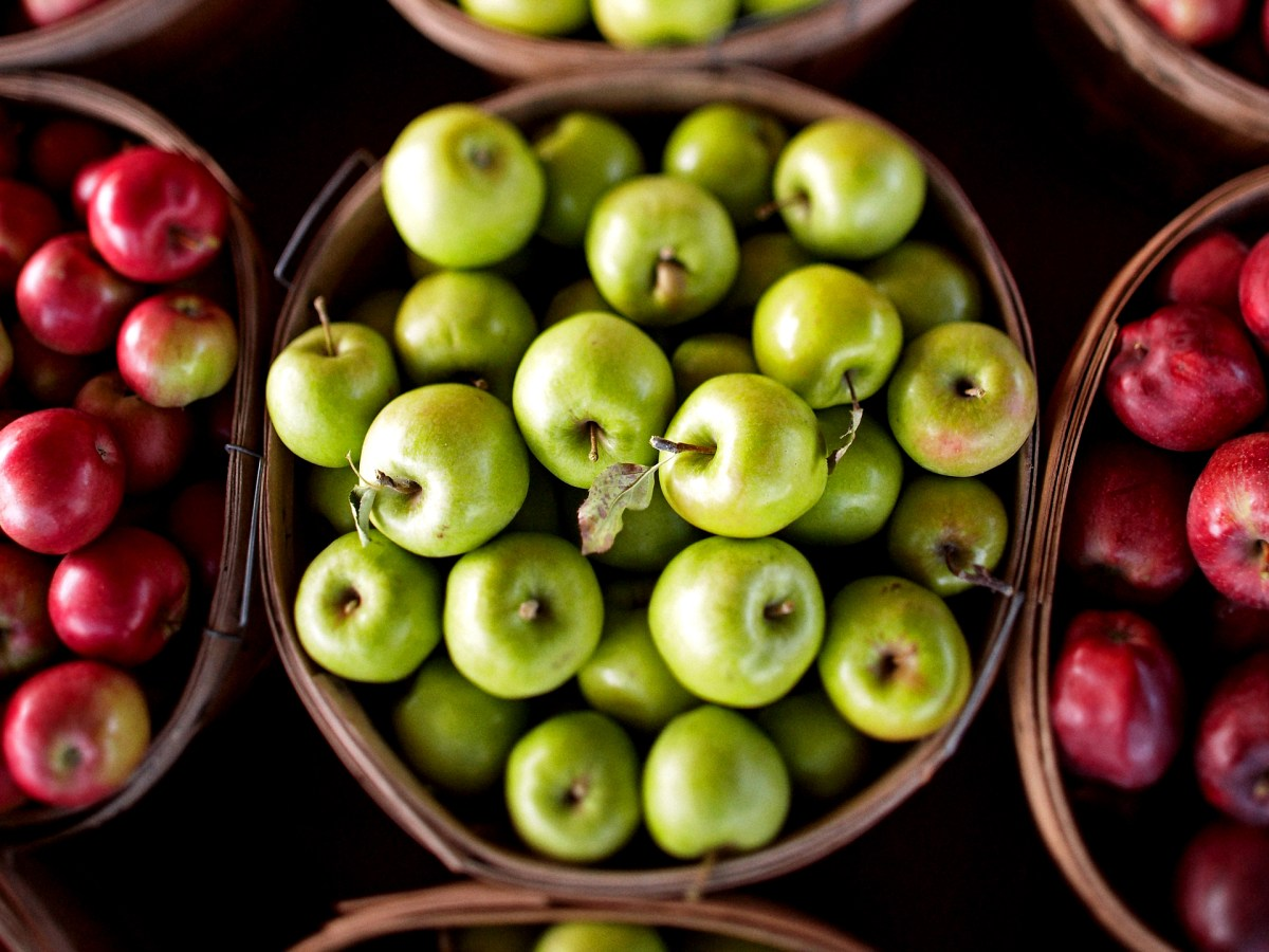 Bushels of juicy fresh red and green apples