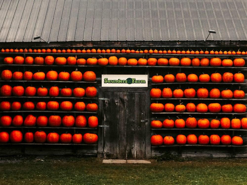 selfie pumpkin wall at Saunders Farm
