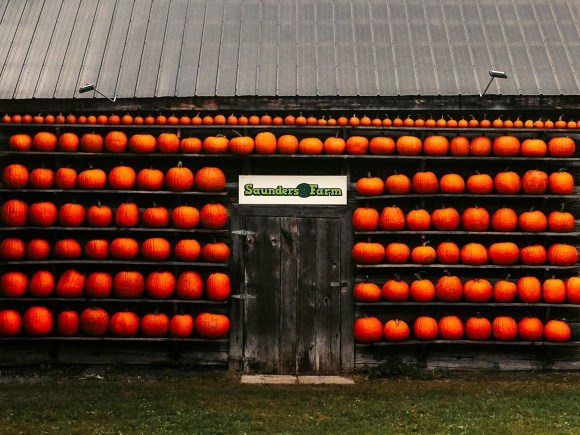 selfie pumpkin wall at Saunders Farm