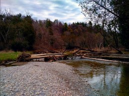 One of countless fallen tree's on the creek.