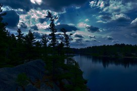 Jack pines overlooking the water.