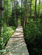 Beaver Dam Trail through the woods.