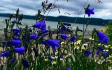 Wonderful array of flowers occupied the coastal rocks.